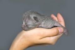 Gatito recién nacido Imagen de archivo libre de regalías
