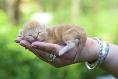 Gatito recién nacido a disposición Imagen de archivo