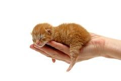 Gatito recién nacido a disposición aislado en blanco Imagenes de archivo