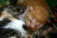 Gatito recién nacido el dormir Fotos de archivo