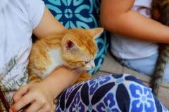 Gatito recién nacido en el girl& x27; mano de s Gato recién nacido del bebé Gatito rojo en manos que cuidan Foto linda del cierre Fotografía de archivo libre de regalías