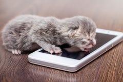 Gatito recién nacido gris cerca del teléfono Gestión del caso del negocio por pho foto de archivo libre de regalías