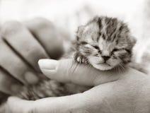 Gatito recién nacido que es sostenido Imágenes de archivo libres de regalías