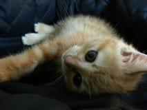 Gatito rojo Imagen de archivo