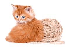 Gatito rojo aislado en un fondo blanco Fotografía de archivo