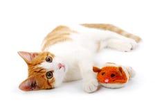 Gatito rojo con el ratón Foto de archivo libre de regalías
