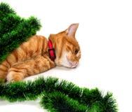Gatito rojo-dirigido cansado mintiendo en su lado en la malla de la Navidad Imagenes de archivo