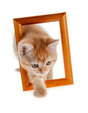 Gatito rojo fuera de un marco de madera Foto de archivo libre de regalías