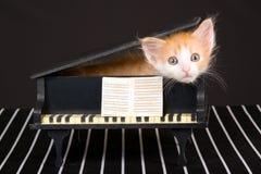 Gatito rojo lindo en mini piano magnífico Fotos de archivo libres de regalías