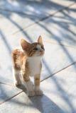 Gatito rojo lindo que mira curiosamente hacia arriba foto de archivo