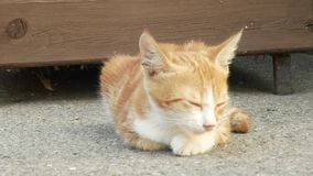 Gatito rojo sin hogar en la calle Cara linda del gato 4K almacen de video