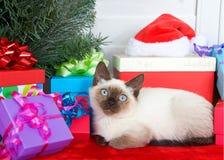 Gatito siamés con los ojos azules que ponen comfortablemente al lado debajo de un árbol de navidad Imágenes de archivo libres de regalías