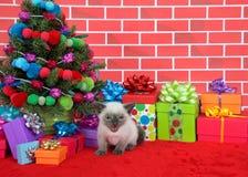 Gatito siamés por el árbol de navidad Imagen de archivo libre de regalías