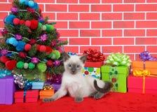 Gatito siamés por el árbol de navidad Foto de archivo
