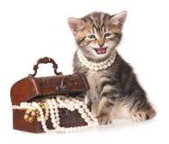 Gatito siberiano Imagen de archivo