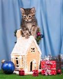 Gatito siberiano lindo Fotos de archivo