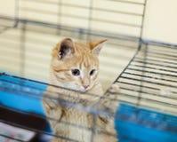 Gatito sin hogar del jengibre en una jaula Imagenes de archivo