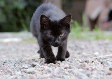 Gatito sin hogar infectado con herpesvirus o chlamydiosis felino Imagen de archivo libre de regalías