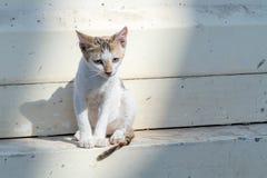 Gatito sin hogar triste solo cerca de la pared en la calle de la ciudad foto de archivo