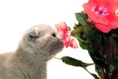 Gatito snuffing la flor imágenes de archivo libres de regalías