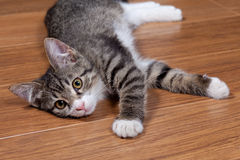 Gatito soñoliento imagen de archivo