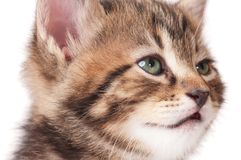 Gatito soñoliento Imagenes de archivo
