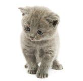 Gatito sobre blanco Foto de archivo