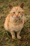 Gatito solo inconformista foto de archivo libre de regalías