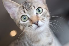 Gatito sorprendido Foto de archivo libre de regalías