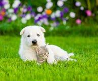 Gatito suizo blanco del abarcamiento del perrito del ` s del pastor en hierba verde Imagen de archivo