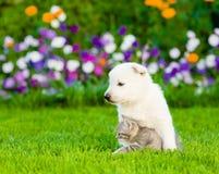 Gatito suizo blanco del abarcamiento del perrito del ` s del pastor en hierba verde Fotos de archivo