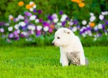 Gatito suizo blanco del abarcamiento del perrito del ` s del pastor en hierba verde Fotos de archivo libres de regalías