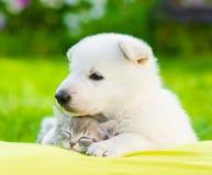 Gatito suizo blanco el dormir del abarcamiento del perrito del ` s del pastor Imagen de archivo