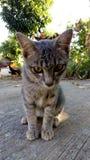 Gatito tímido Foto de archivo
