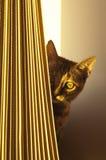 Gatito tímido imagenes de archivo