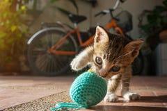 gatito tailandés año de 1 mes que juega la bola azul del hilado foto de archivo libre de regalías