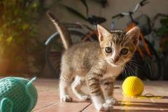 gatito tailandés año de 1 mes que juega la bola azul del hilado fotografía de archivo libre de regalías