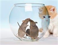 Gatito tentado Fotografía de archivo libre de regalías