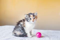 Gatito tricolor hermoso que juega con una edad de la bola 3 meses Imagen de archivo libre de regalías