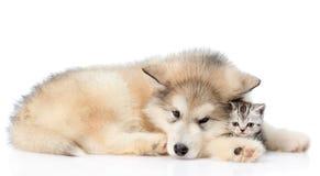 Gatito triste del abarcamiento del perro Aislado en el fondo blanco Fotos de archivo