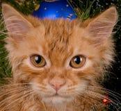 Gatito y árbol de navidad Imagenes de archivo