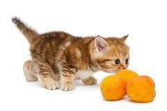 Gatito y aapricots Imagenes de archivo