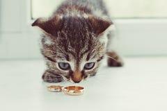 Gatito y anillos Imagen de archivo libre de regalías