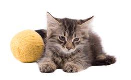 Gatito y bola marrones divertidos del hilo Imagen de archivo