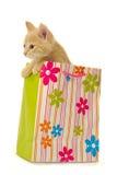 Gatito y bolso de compras Foto de archivo