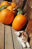 Gatito y calabazas Imágenes de archivo libres de regalías