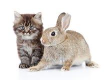 Gatito y conejito Fotos de archivo