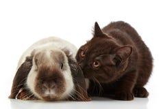 Gatito y conejo Foto de archivo libre de regalías