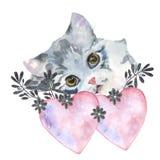 Gatito y corazón Imagenes de archivo