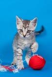 Gatito y cuerdas de rosca para hacer punto Imagen de archivo